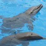Die Delphine in Seaworld Miama